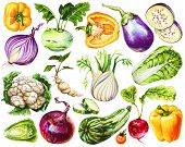 Set Of Fresh Hand-drawn Vegetables. Watercolor Drawing Healthy Food. Image Of Bell Pepper, Onion, Eg poster