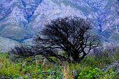 pic of fynbos  - black green mountain flowers tree dead grass - JPG