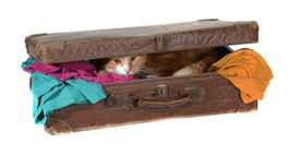 foto of snoopy  - snoopy tomcat in old suitcase with clothes on white - JPG