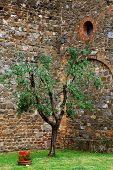 stock photo of salvatore  - Architectural detail of Mantalcino Fortress - JPG