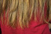 foto of split ends  - Terrible destroyed long hair split ends closeup - JPG