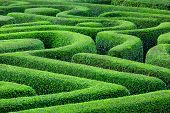 picture of maze  - Green plant maze - JPG