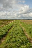 foto of marshlands  - Lush green grass and a track on a dyke running through marshland with a blue cloudy sky in the distance - JPG