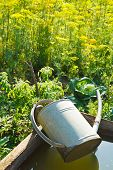 pic of trough  - trough with water for garden watering and handshower in garden in summer day