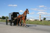 stock photo of carriage horse  - Amish horse and carriage agriculture - JPG