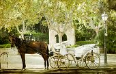 pic of chariot  - Vintage photo of tourist chariot in the old city of Palma de Mallorca - JPG