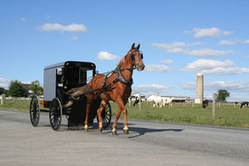 picture of carriage horse  - Amish horse and carriage agriculture - JPG