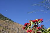 picture of moon-flower  - Red flowers against the blue sky and mountains on the route of the Annapurna trek - JPG