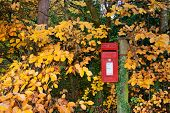 picture of postbox  - traditional red English postbox on a post amongst beautiful autumn trees - JPG