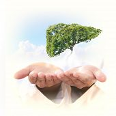 picture of liver  - Conceptual image of green tree shaped like human liver - JPG