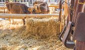 picture of riding-crop  - riding horse equipment hang on wooden fence - JPG
