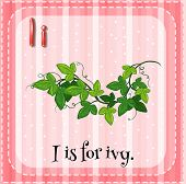 foto of english ivy  - Illustration of an alphabet i is for ivy - JPG