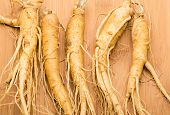 stock photo of ginseng  - Ginseng - JPG