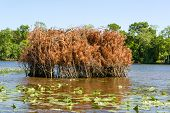 stock photo of duck-hunting  - A duck blind on the Chickahominy river just west of Williamsburg Virginia - JPG