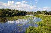 foto of marsh grass  - Rural landscape with river and water lilies and lots of shore grass - JPG