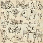 foto of freehand drawing  - ANIMALS around the World  - JPG
