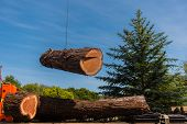image of section  - A large section of a Redwood tree is moved by a crane and cable to a trunk bed - JPG