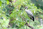 stock photo of jungle birds  - Open - JPG