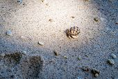 pic of hermit crab  - hermit crab in its shell crawling on the sand AoSane - JPG