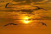 Постер, плакат: Birds Silhouette