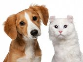 stock photo of cat dog  - Mixed - JPG