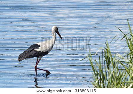 poster of White Stork