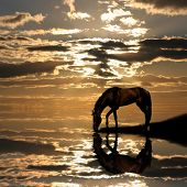 Horse On Sunset
