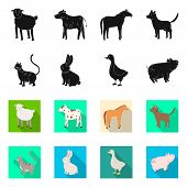Isolated Object Of Breeding And Kitchen Sign. Set Of Breeding And Organic Stock Symbol For Web. poster