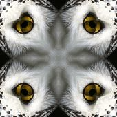 Seamless Symmetrical Pattern Abstract Animal Fur Texture poster