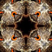 Seamless Symmetrical Pattern Abstract Bird Feathers Texture poster