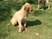 A Picture Of Puppies From India. Two Puppies Playing In Park. poster