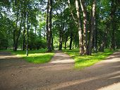 Three Way Foot Path In The Park. Landscape Of Sunny Summer Forest With Crossroad. Making Decisions A poster