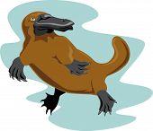 stock photo of platypus  - Vector art on animals and wildlife creatures - JPG