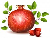 Pomegranate with leaves. vector illustration