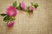Pink Asters On Canvas Background