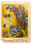 Stamp Printed In Ussr (russia) Shows A Siberian Squills With The Inscription