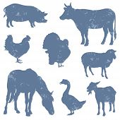 image of turkey-hen  - Set of Farm Animals Silhouettes - JPG