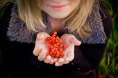 stock photo of rowan berry  - Red rowan berries in the girl - JPG