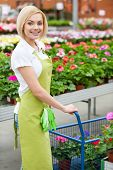 stock photo of apron  - Beautiful young woman in apron using a cart full of potted plants while standing in a greenhouse - JPG