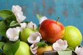 foto of apple blossom  - Fresh apples with apple blossom - JPG