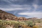 stock photo of antelope  - Antelope Valley Poppy Reserve in California photo taken in spring time - JPG