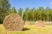 stock photo of hay bale  - Bales of hay drying in the sun - JPG