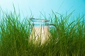 stock photo of pitcher  - Glass pitcher of milk standing on grass close up - JPG