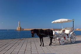picture of carriage horse  - A black horse hitched to a white carriage on the promenade in Chania - JPG