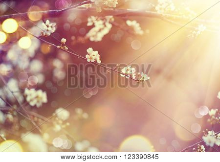 Spring border or background art with blossom. Beautiful nature scene with blooming tree and sun flar
