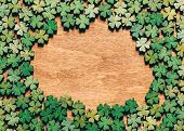Four-leaf clovers laying on wooden floor, creating a circle. Irish culture. St. Patricks Day. poster