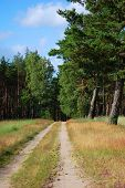 image of dirt road  - Dirt road among fields planted with pines - JPG