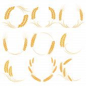 Wheat Or Barley Ears. Harvest Wheat Grain, Growth Rice Stalk And Whole Bread Grains Or Field Cereal  poster