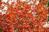 Colorful Season. Beautiful Autumn Background. Autumn Leaves Backdrop. Fall Season Advertisement. Nat poster