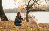 Obedient Golden Retriever Dog With His Owner Practicing Paw Command. Happiness And Friendship. Pet A poster